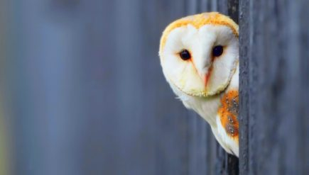 beautiful-owl-wallpapers-hd-pictures